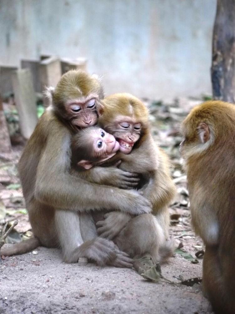 Mono y mujer 8