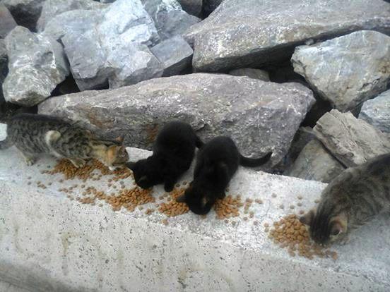 Mujer Perros y gatos 4
