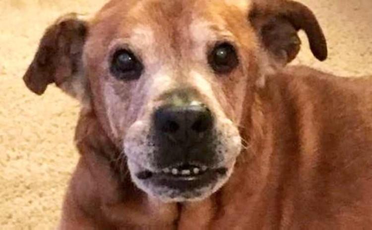 Perrito sonrisa 1