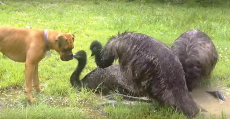 Perrito y Emu 5