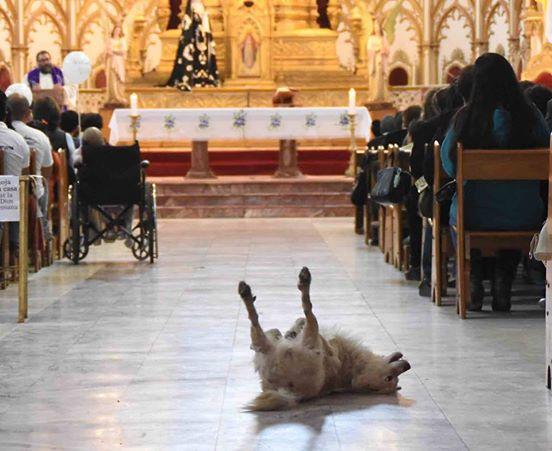 Perro Iglesia 4