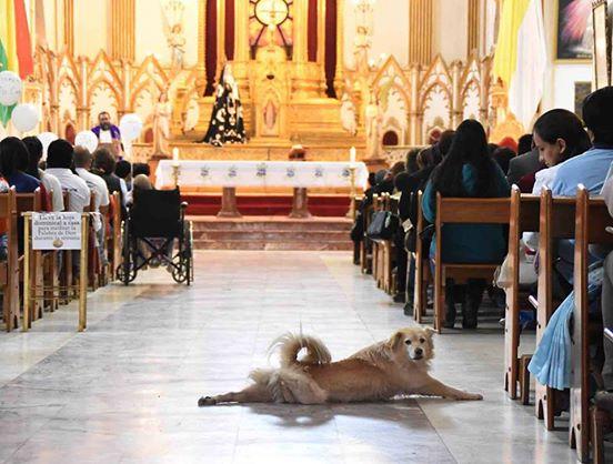 Perro Iglesia 5