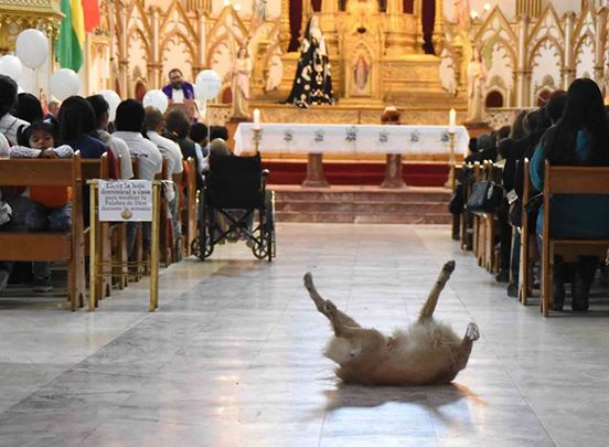 Perro iglesia 1