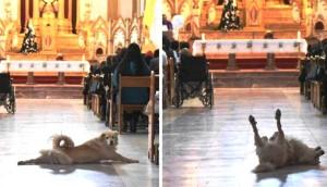 Perro iglesia portada