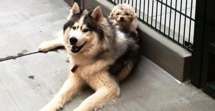 Perros abrazados 1