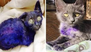 Purpura 14