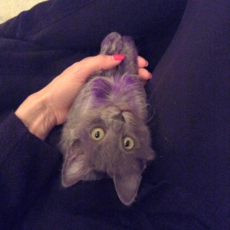 Purpura 17