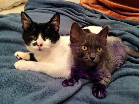 Purpura 7