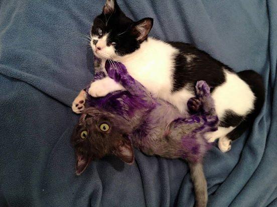 Purpura 8