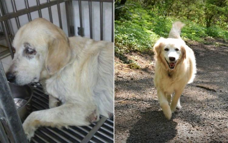 adopcion antes y desp 1