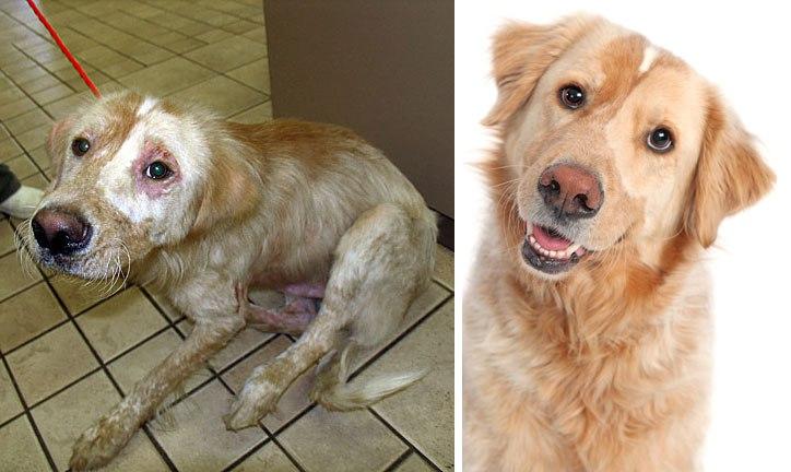 adopcion antes y desp 11