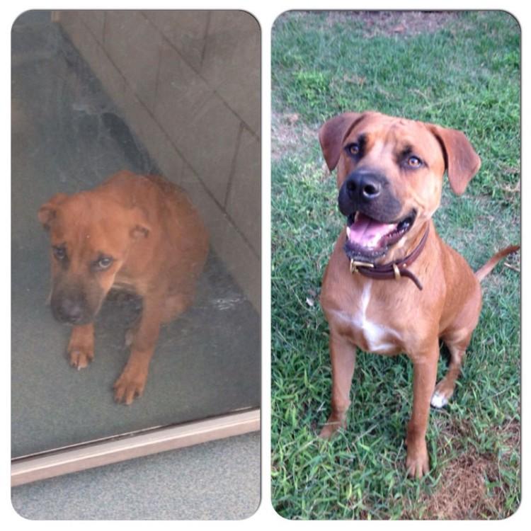 adopcion antes y desp 3