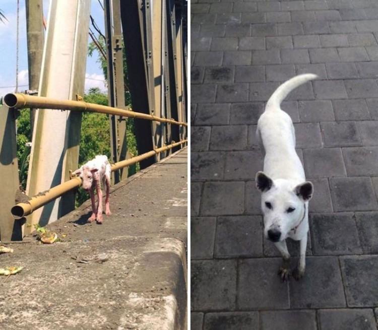 adopcion antes y desp 6