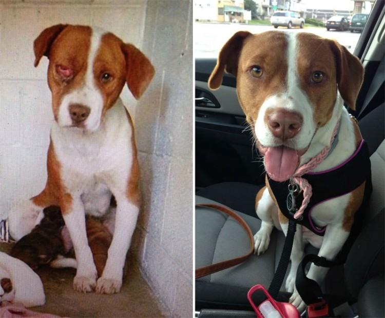 adopcion antes y desp 8