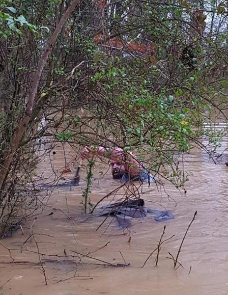 animales-rescatados-inundacion2