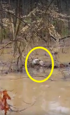 animales-rescatados-inundacion4