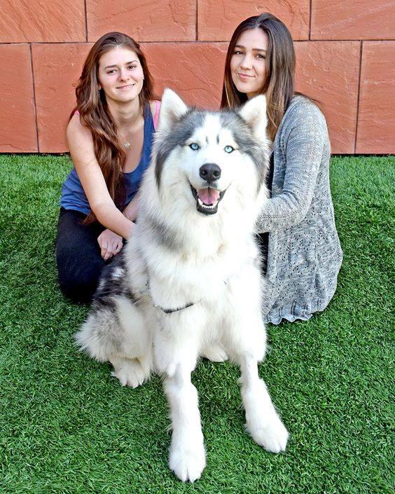 arlo-adoptado-familia
