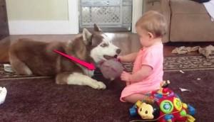 bebe-presta-juguete-a-husky