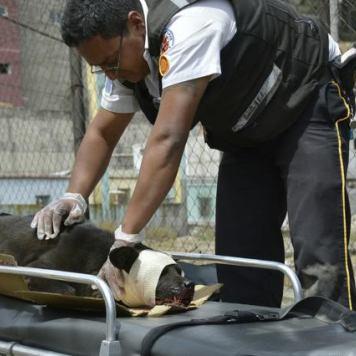 bombero-rescata-perro-atropellado3