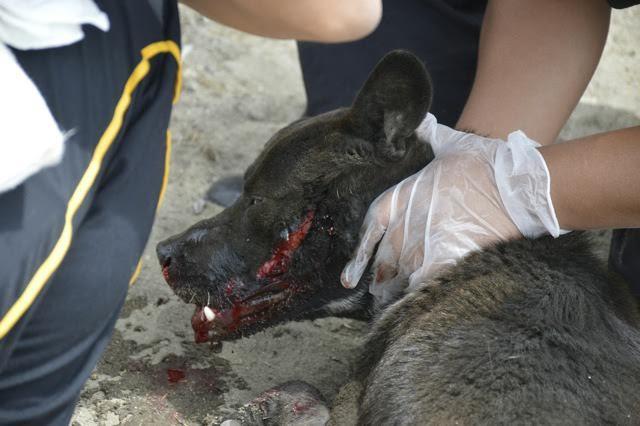 bombero-rescata-perro-atropellado6