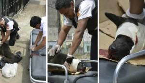 bombero-rescata-perro-atropellado8