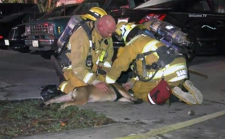 bombero-rescata-perro2