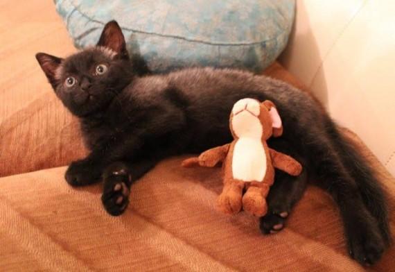 bruce gatito 10