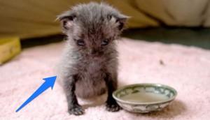 bruce gatito 12