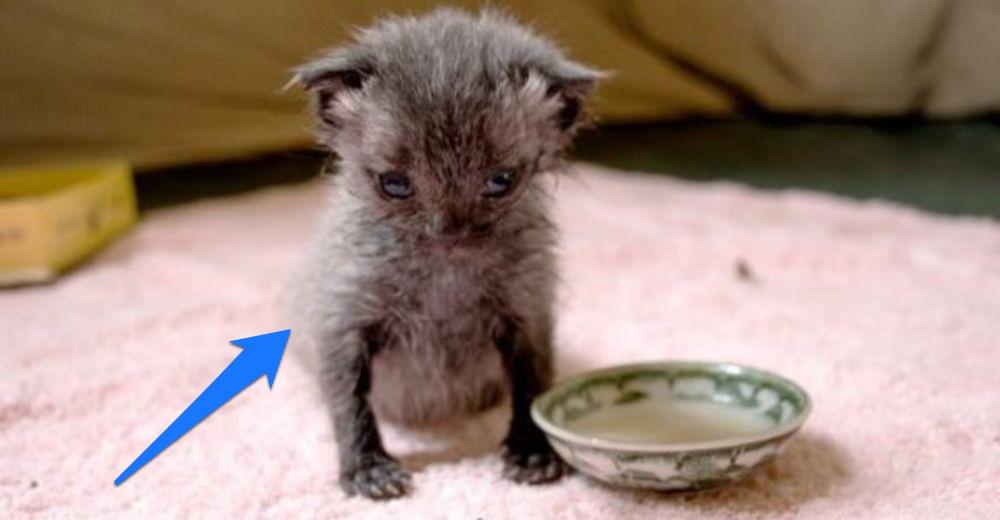 Encuentran un diminuto gatito en la calle en plena lluvia todavía con el cordón umbilical