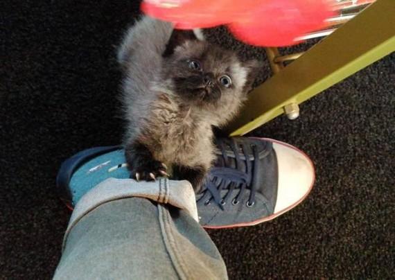 bruce gatito 7