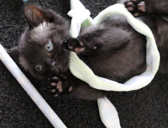 bruce gatito 8