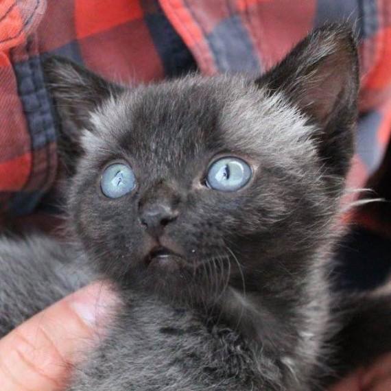 bruce gatito 9