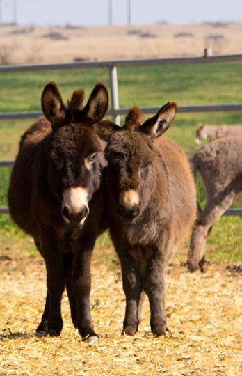 burros-rescatados1