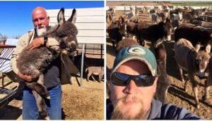 burros-rescatados2 - copia