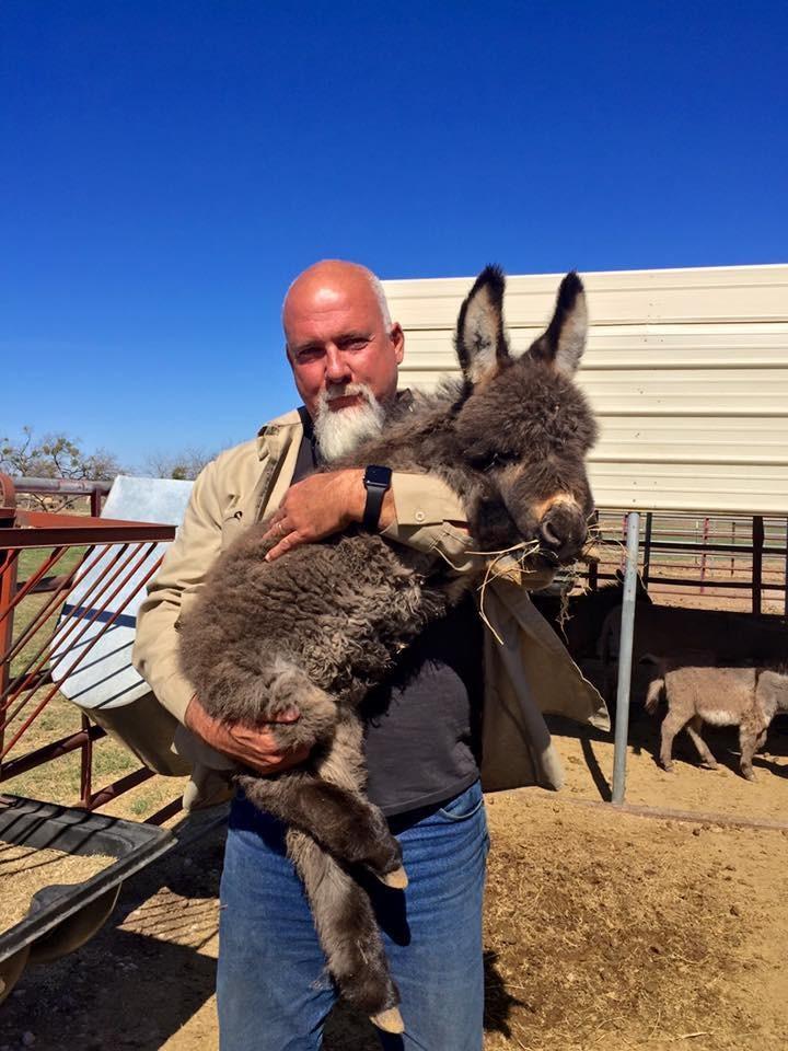 burros-rescatados2