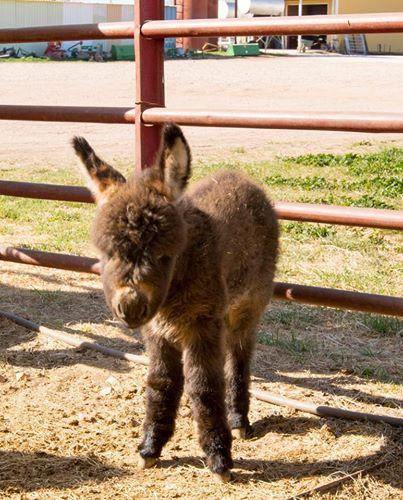 burros-rescatados3