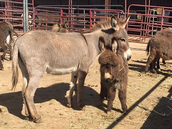 burros-rescatados4