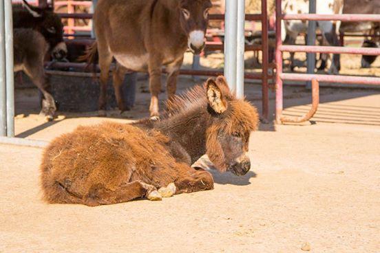 burros-rescatados5