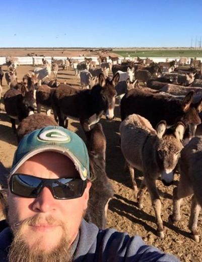 burros-rescatados8