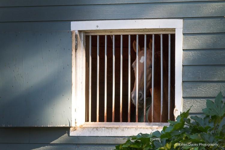 caballo encerrado 1