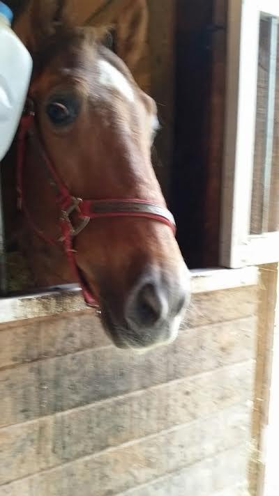 caballo encerrado 3