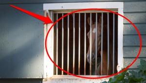 caballo encerrado 5
