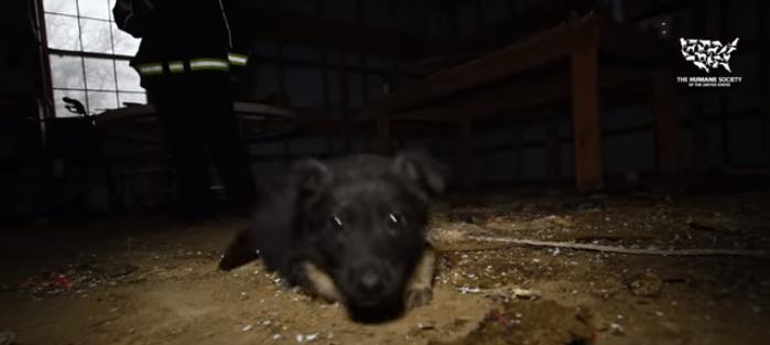 cachorro daniel 1