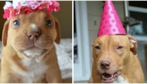 celebran-primer-cumpleaños-de-penny2 - copia (2)