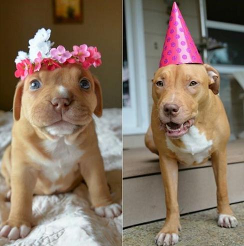 celebran-primer-cumpleaños-de-penny2