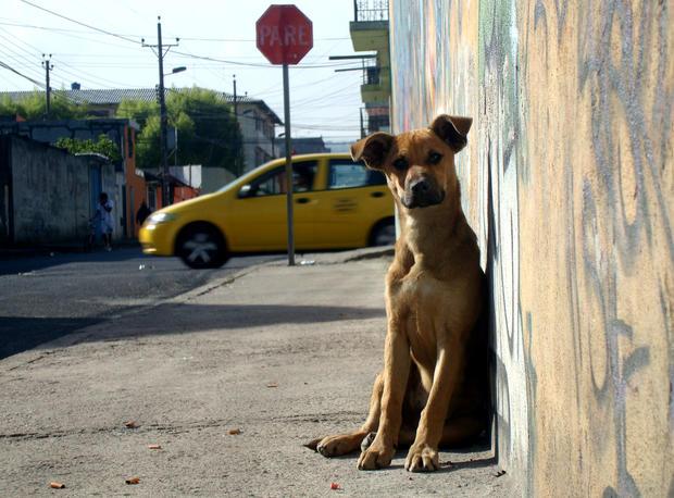 centro de rehab para animales 1