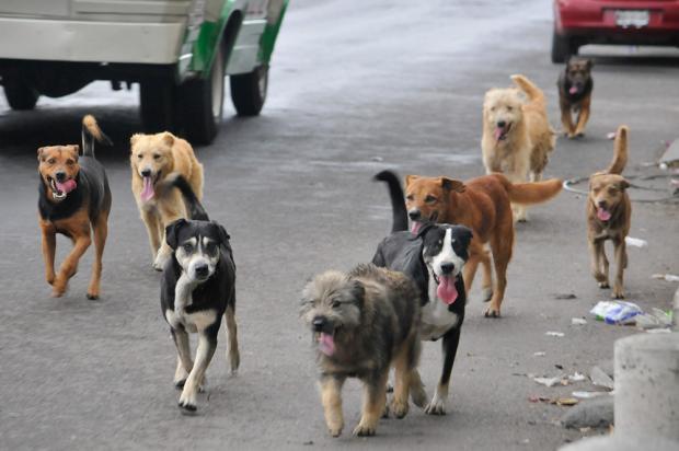 centro de rehab para animales 5