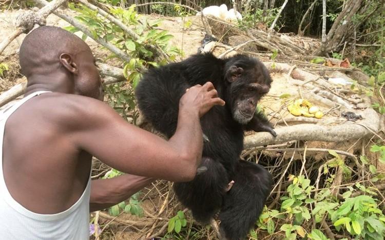 chimpance ponso abraza visitante 13