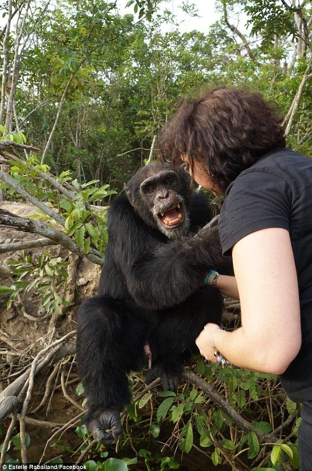 chimpance ponso abraza visitante 3