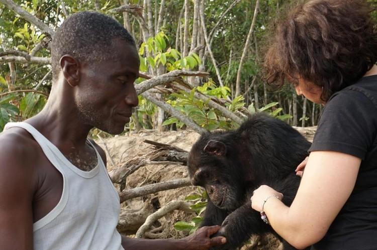 chimpance ponso abraza visitante 9